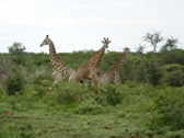 South East Swaziland - Game Reserve