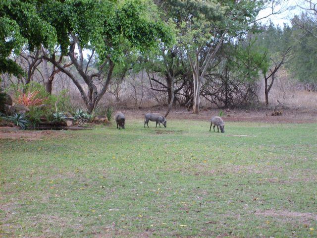 Mananga Warthogs